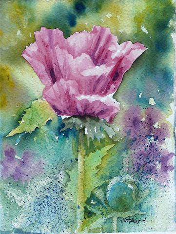 2008 Pattie's Plum Watercolour
