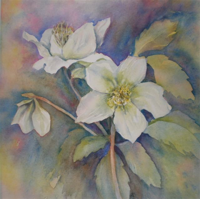 2009 Christmas Roses Watercolour