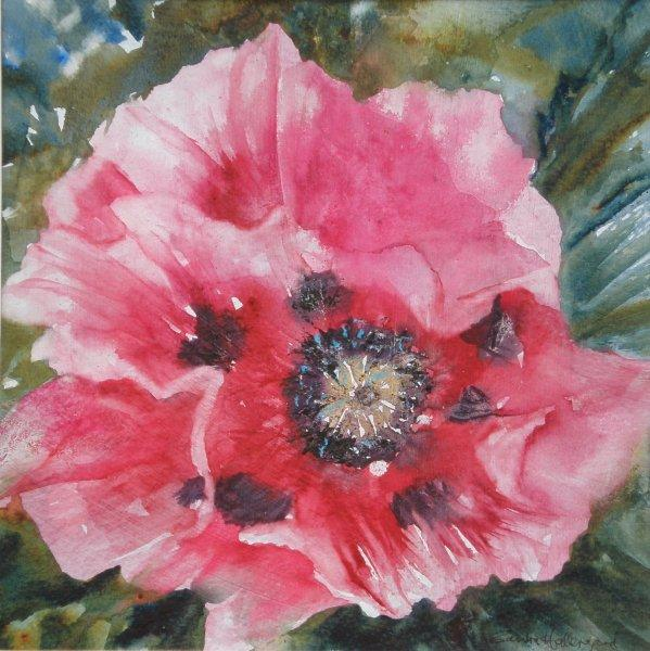 2011 Oriental Poppy Watercolour