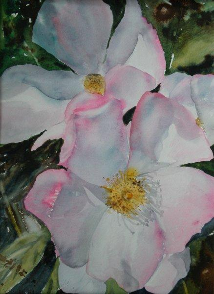 2011 Wild Rose Watercolour