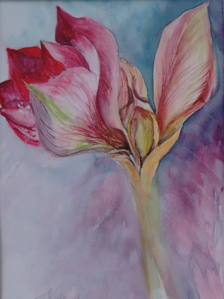 2016 Amaryllis Watercolour + ink